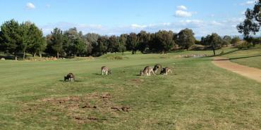 Gold Creek Country Club Canberra